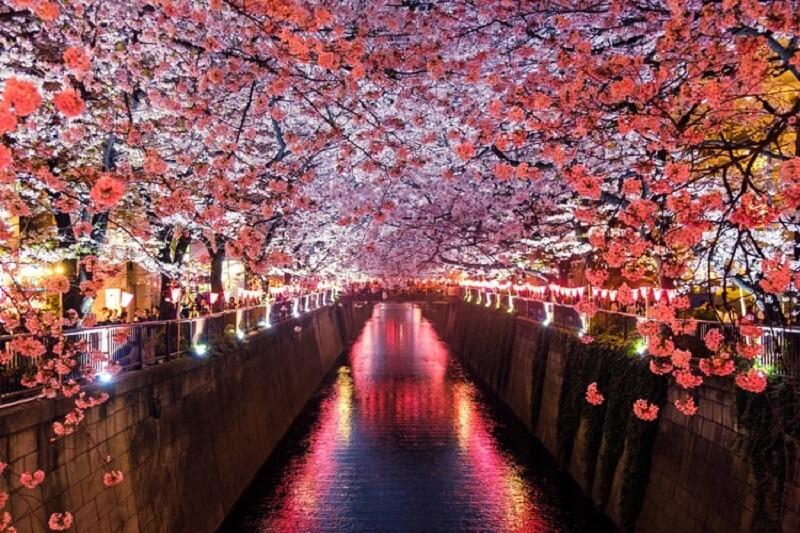 Co wpływa na długowieczność Japończyków?