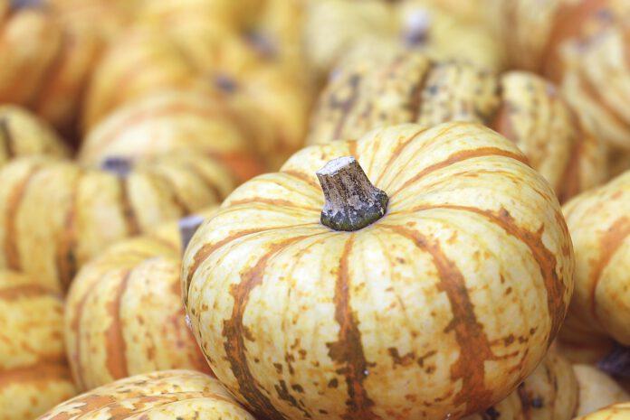 Jakie warzywa i owoce sezonowe powinniśmy jeść jesienią