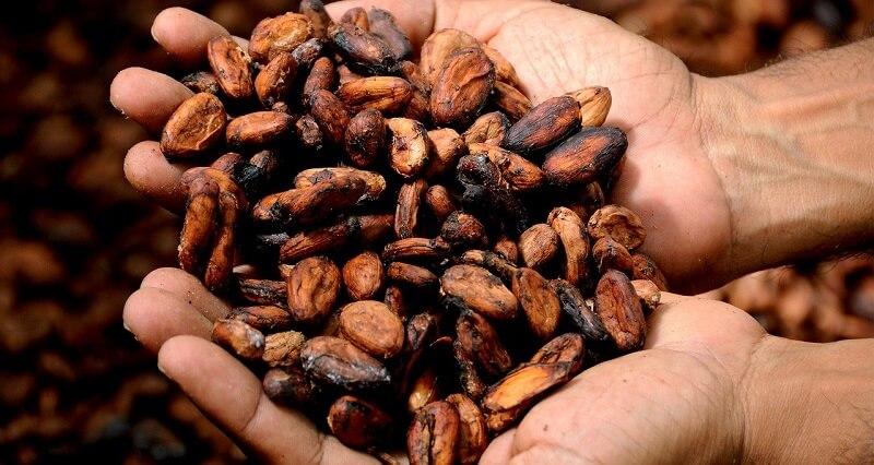kakao zastosowanie