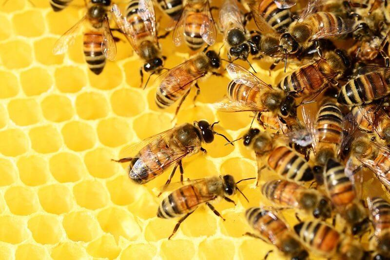 Propolis i pyłek pszczeli – zastosowanie i właściwości